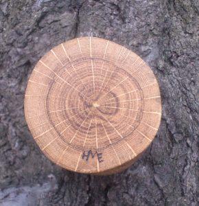 Neodym-Magnet in Eichenholz