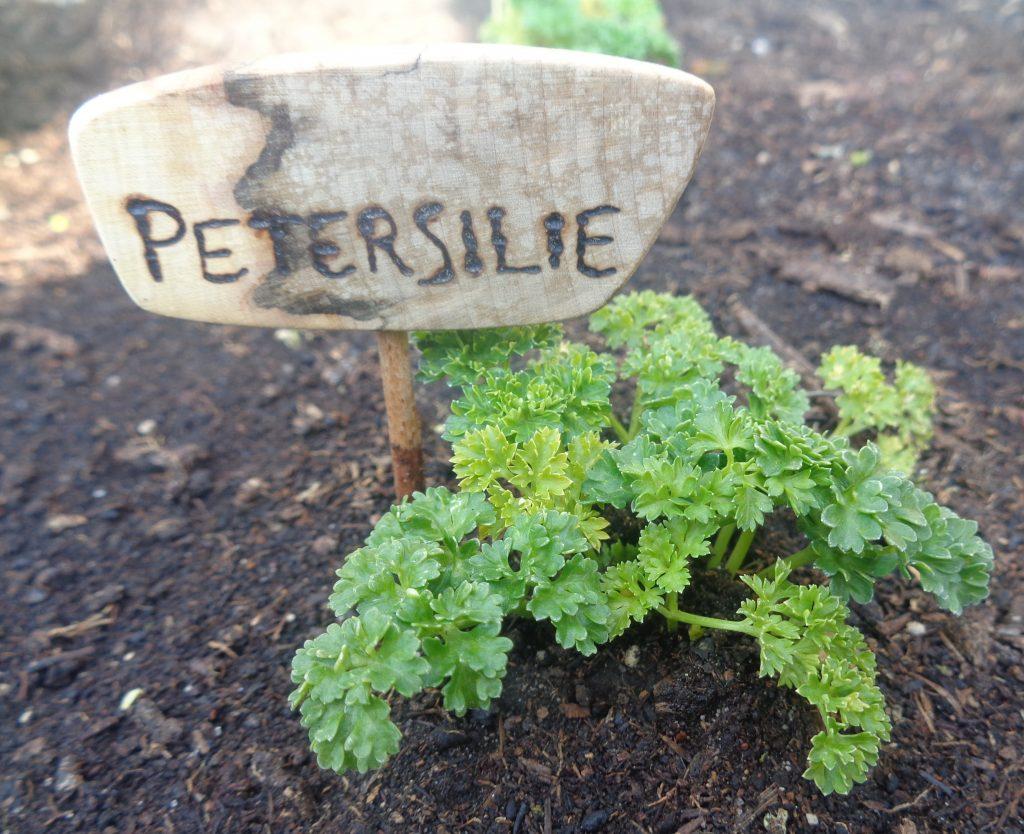 """Beetstecker """"Petersilie"""""""