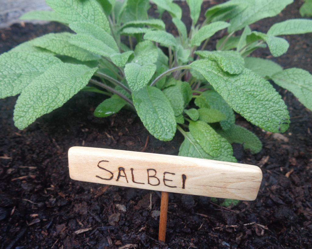 "Beetstecker ""Salbei"""