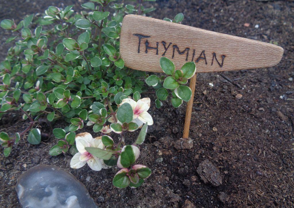 "Beetstecker ""Thymian"" aus Platane"
